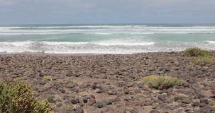 Wild beach with vegetation in Lanzarote, Canary Islands, Spain stock video