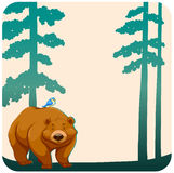Wild bear Stock Images
