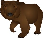 Wild bear illustration Royalty Free Stock Photo