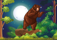 Wild bear in the jungle at night Stock Photo