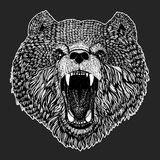 Wild bear Vector image for tattoo, t-shirt, posters Hand drawn illustration Stock Photo