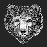 Wild bear Vector image for tattoo, t-shirt, posters Hand drawn illustration Royalty Free Stock Photos
