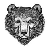 Wild bear Vector image for tattoo, t-shirt, posters Hand drawn illustration Stock Photos