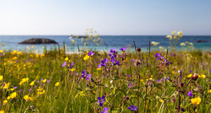 Wild, beautiful flowers on a beach. With turquoise and deep blue water and a stone on a background. Blue sky Stock Images