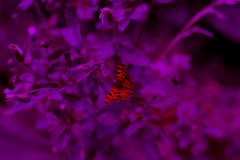 Wild romantic butterfly on the flower Royalty Free Stock Image