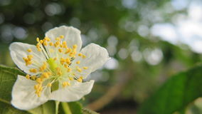 Wild beautiful tropical flower Stock Photo