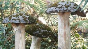 The wild beauty of mushroom royalty free stock photos