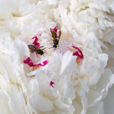 Wild bee and wasp Royalty Free Stock Photography