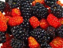 Wild Berries. Closeup photo of some mixed wild berries stock photography