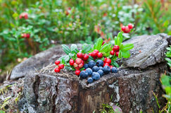 Wild berries Stock Photo