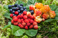 Wild berries Royalty Free Stock Image