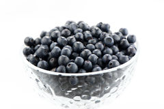 Wild berries Stock Photography