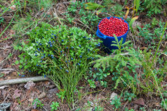 Wild berries Royalty Free Stock Photos