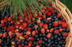 The wild berries. Mix of wood berries: wild strawberry and a bilberry stock photos
