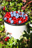 Wild berries: autumnal harvest Royalty Free Stock Photography