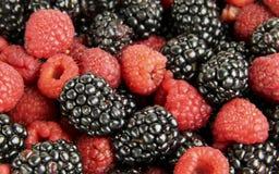 Wild Berries Background Stock Image