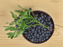 Wild berries of bilberry Stock Image