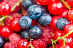 Wild berries. Blueberry, raspberry,  red currant closer-up Stock Images