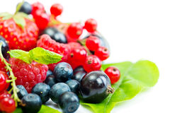Wild berries. Blueberry, strawberry, raspberry, black and red currant  on green leaf Stock Images