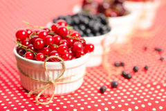 Wild berries in bowls Royalty Free Stock Photo