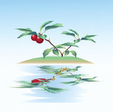 Wild berries bush and reflection in water. Royalty Free Stock Image