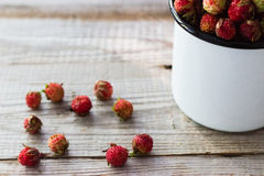 Wild berries in a cup. Stock Photos