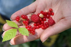 Wild berries. Different wild berries on the girl's hand Stock Photo