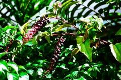 Wild berries Stock Photos
