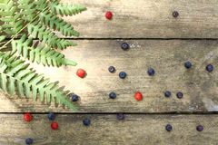 Wild berries and ferns Royalty Free Stock Images