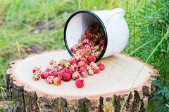Wild berries in the forest. Wild strawberry on stump on green background Stock Photos