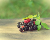 Wild berries Stock Images