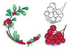 Wild berries. Hand drawn eed berries cranberry, holly-berry in wreath and isolated Stock Image