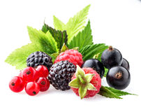 Wild berries with leaves Royalty Free Stock Photography