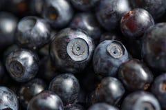 Wild berries Stock Photo