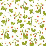 Wild berries seamless pattern on white background. Strawberries with hand drawn style. Vector illustration royalty free stock images