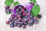 Wild berries spill out of the bucket Stock Images