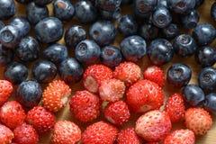 Wild berries Royalty Free Stock Image