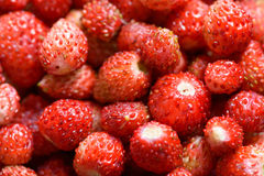 Wild berries Stock Photography