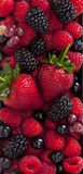 Wild berries and strawberry Stock Photography