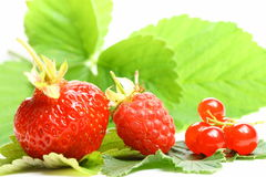 Wild berry royalty free stock photos