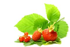 Wild berry Stock Image