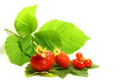 Wild berry. Isolated on white background Stock Image