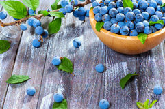 Wild berry blackthorn Royalty Free Stock Photos