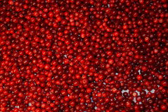 Wild Berry Cranberry. Royalty Free Stock Image