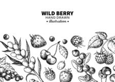 Wild berry drawing. Hand drawn vintage vector frame. Summer fruit set. Of strawberry, cranberry, currant, cherry, srawberry, blueberry. Detailed organic food royalty free illustration