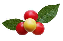 Wild berry and leaves Royalty Free Stock Photo