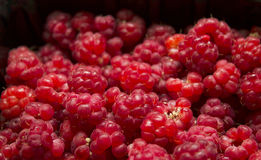 Wild berry raspberry Royalty Free Stock Photography