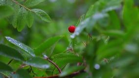 Wild berry Royalty Free Stock Photo