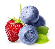 Wild berry, strawberry, blueberry isolated Stock Photography