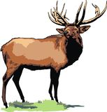 Wild big buck Stock Images